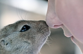 african-bush-squirrel-paraxerus-african-squirrel-child-s-face-160411