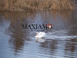 Maxiamo header 3