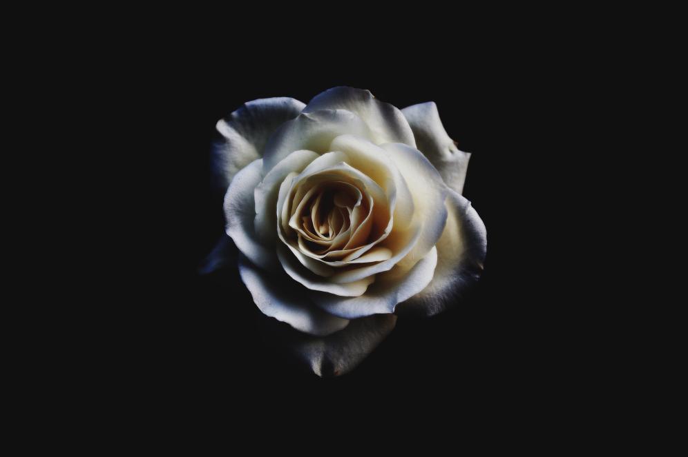Floral (Rose)