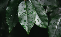 Rain for the parched earth