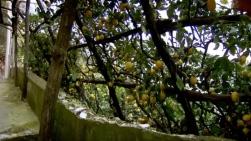 "Screen shot: ""Monty Don's Italian Gardens"", episode 3/4: ""The South"" (2011)"