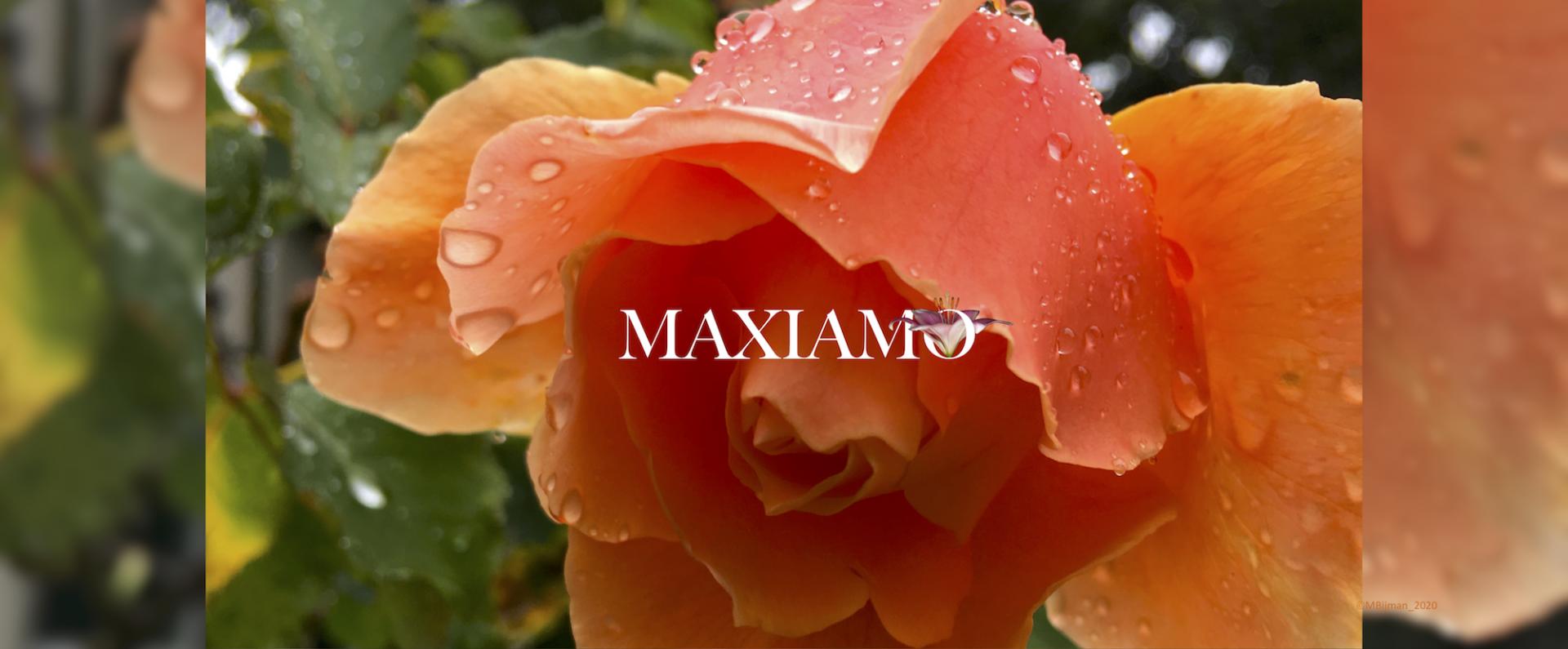 Maxiamo Perfumes